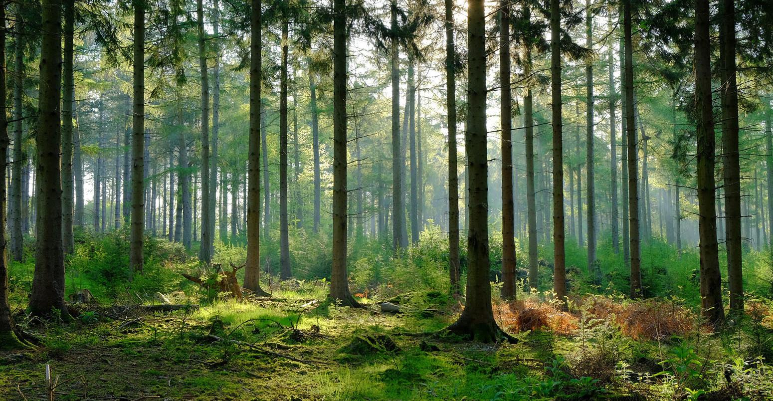 Les, pozemek.